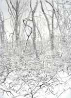 Emily Brown, Thicket 15, 2015, Ink on paper, 71 x 52 inches