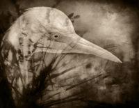 "Marsh Bird #2, 2018, photography, 8.5 x 11"""
