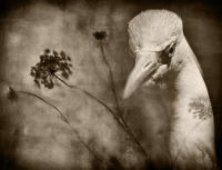 "Marsh Bird #1, 2018, photography, 8.5 x 11"""