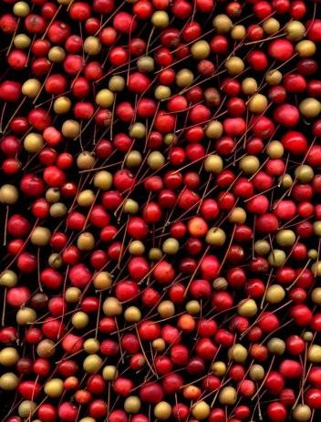 Malus Red Jade Malus American Beauty Pyrus calleryana digital photo 20X16 Fred Michel