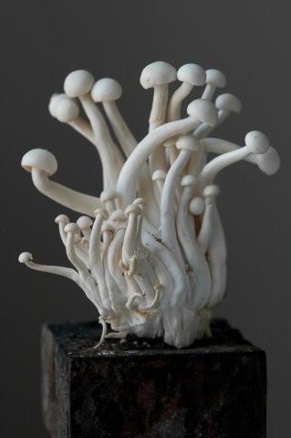 "Lynn Karlin, ""White Beech Oyster Mushroom,"" photograph"