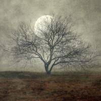 Woodman-CMCA-2014-auction.jpeg