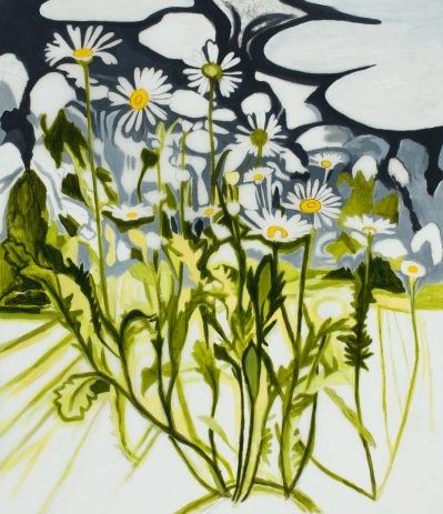 Oxeye Daisy Drawing