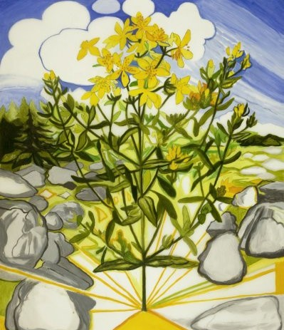 St. John's Wort Drawing