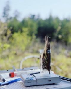 "Jennifer Wilkey, ""Weighing a Northern Waterthrush,"" 2013, digital inkjet print, 16 x 20 in."